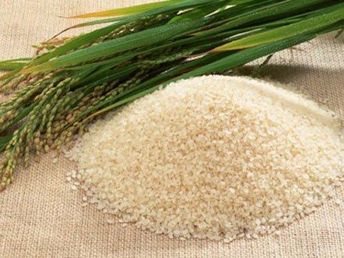 Description: Kết quả hình ảnh cho gạo nhật bản